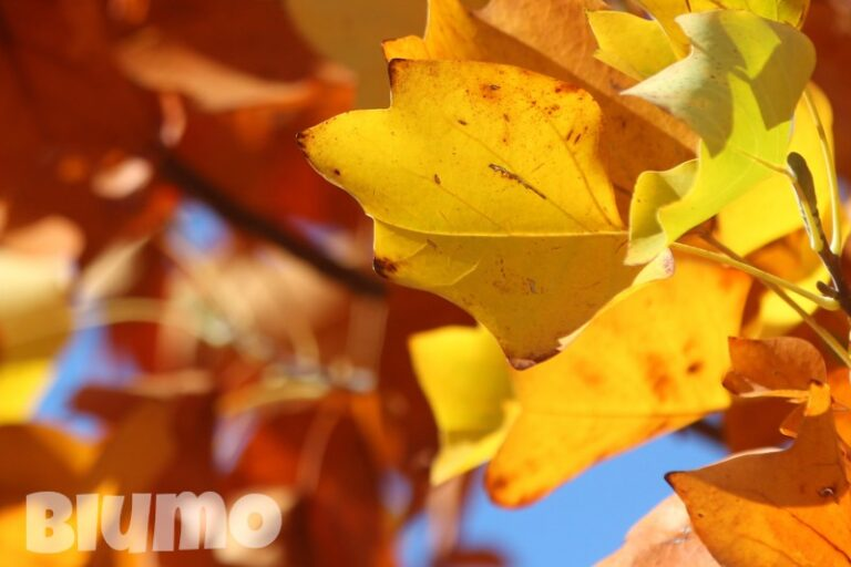 Read more about the article Falling leaves
