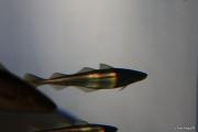 2008_08_30_04h02m02