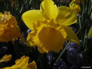 2008_04_06_17h45m04